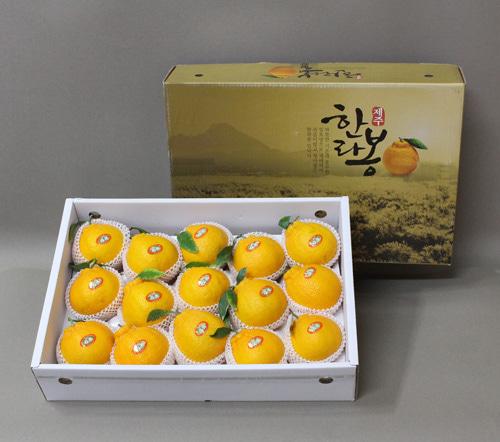 [시골농부] 청제제주 명품 한라봉 세트 5kg/15~20과이식사